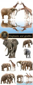 Elephants and giraffes, animals - stock photos
